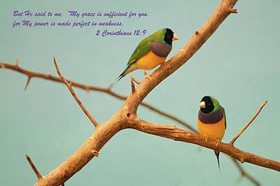 Photograph - 2 Corinthians 12-9 by Paul Mangold