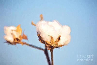 Cotton Boll Art Print by Scott Pellegrin