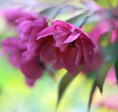 Soft Digital Art - Crabapple Blossom by Jessica Jenney