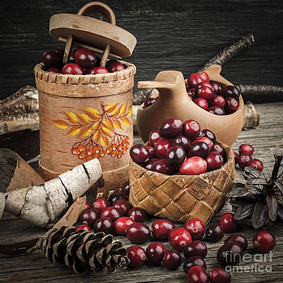 Still Life Royalty-Free and Rights-Managed Images - Cranberries still life by Elena Elisseeva