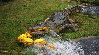 Photograph - Crocodile Attack by Gary Crockett