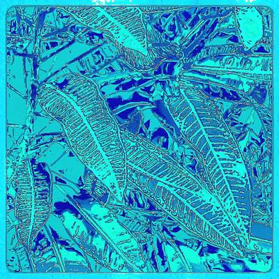 Photograph - Croton Series - Blue by William Braddock
