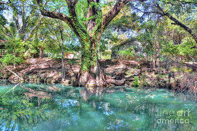 Photograph - Cypress Creek by Savannah Gibbs