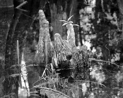 Photograph - Cypress Knees by Carol  Bradley