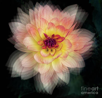 Photograph - Dahlia 'keith H.' by Ann Jacobson