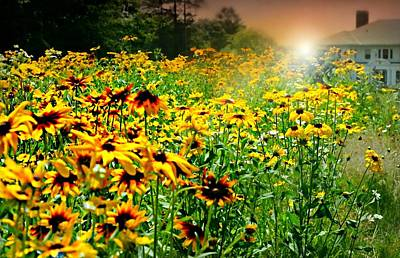 Photograph - Daisy Days by Diana Angstadt