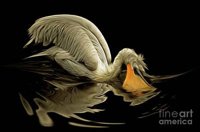Chiaroscuro Digital Art - Dalmatian Pelican by Michal Boubin