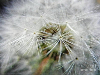 Photograph - Dandelion Macro by Jim And Emily Bush