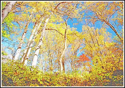 Photograph - Deciduous Forest Canopy, Autumn by A Gurmankin