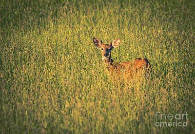 Photograph - Deer At Dusk by Cheryl Baxter