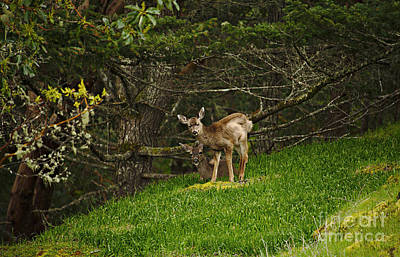 Photograph - Deer by Cendrine Marrouat