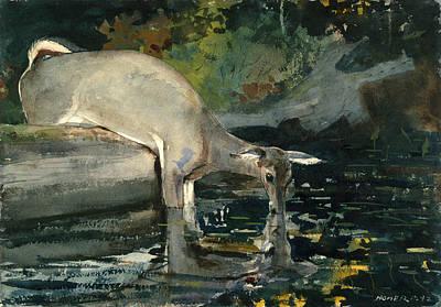 Winslow Homer Drawing - Deer Drinking by Winslow Homer