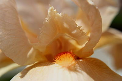 Photograph - Delicate  by Trent Mallett