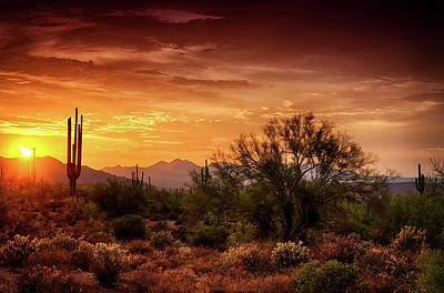 Photograph - Desert Gold  by Saija  Lehtonen