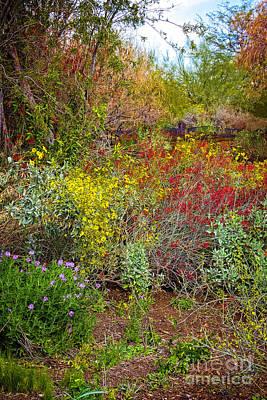 Photograph - Desert Spring by Jon Burch Photography