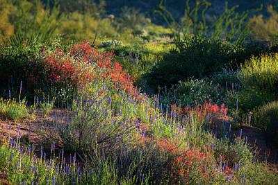 Photograph - Desert Wildflowers  by Saija Lehtonen