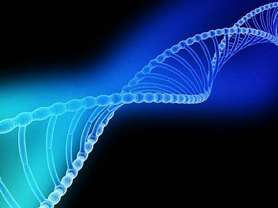 Heredity Photograph - Dna Helix by Pasieka