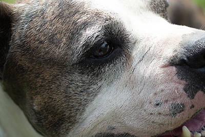 Photograph - Dog At Satchel's Last Resort by Richard Goldman