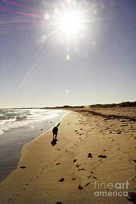 Photograph - Dog Beach by Cassandra Buckley