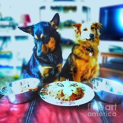 #dogs #darcy #gsd #germanshepherd Art Print