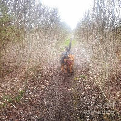 Gsd Photograph - #dogs #gsd #germanshepherd by Isabella F Abbie Shores