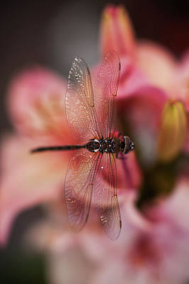 Macro Dragonfly Photograph - Dragonfly Serenity by Mike Reid