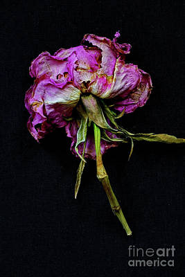 Dried Flower Potpourri  Art Print