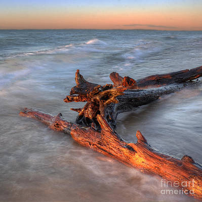Driftwood At Whitefish Point Art Print by Twenty Two North Photography