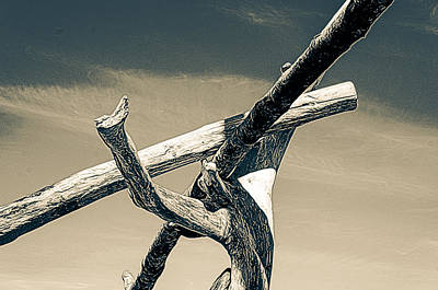 Photograph - Driftwood Juncture by Ronda Broatch