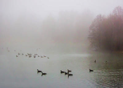 Photograph - Ducks In The Morning Mist by Ron Grafe