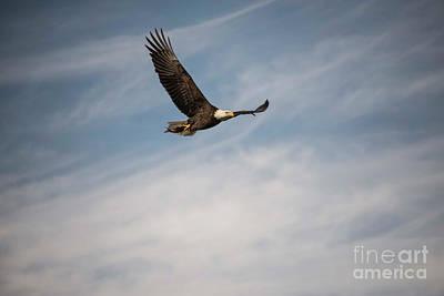 Photograph - Eagles On The Fox - 14 by David Bearden
