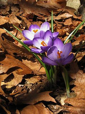Photograph - Early Spring by John Scates