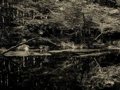 Photograph - Enchanting by Kohji Asakawa