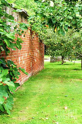 Photograph - English Orchard by Tom Gowanlock
