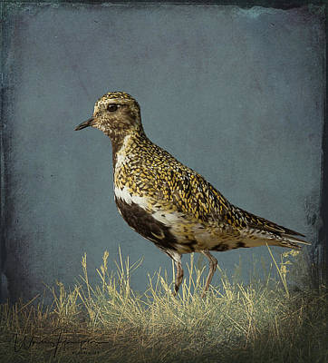 Photograph - European Golden Plover - 9133,st by Wally Hampton
