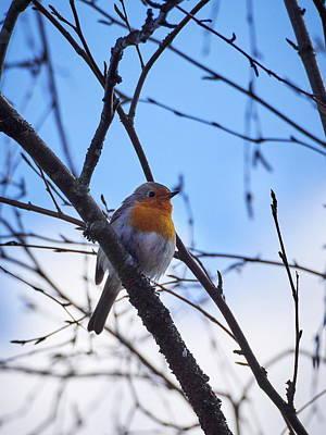 Photograph - European Robin by Jouko Lehto