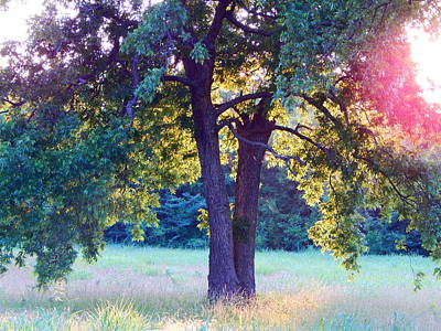 Photograph - Evening Light by Virginia Kay White