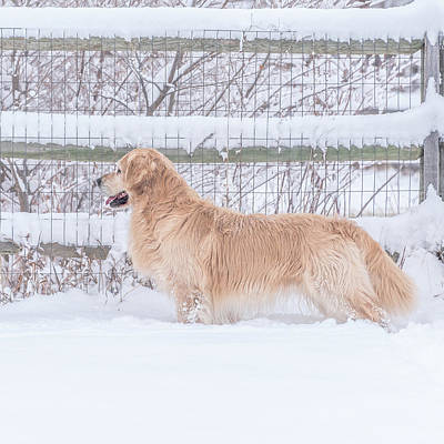Photograph - Ever Watchful by Jennifer Grossnickle