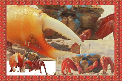 Mixed Media - Exotic Crabs Wild Varieties Unique Mating And Crecreation Styles Grand Sizes Building Tunnels In Sta by Navin Joshi