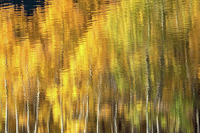 Photograph - Fall Abstract 3 by Jonathan Nguyen