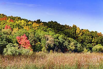 Photograph - Fall Foliage by William Norton