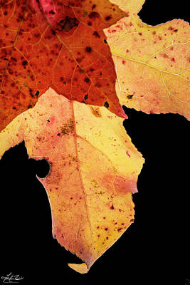 Photograph - Fall Leaves by Phil Rispin