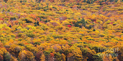 Fall Trees Over Glen Lake Art Print by Twenty Two North Photography