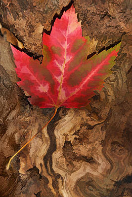 Photograph - Fallen Leaf by Leda Robertson