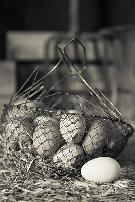 Photograph - Farm Fresh Eggs by Edward Fielding