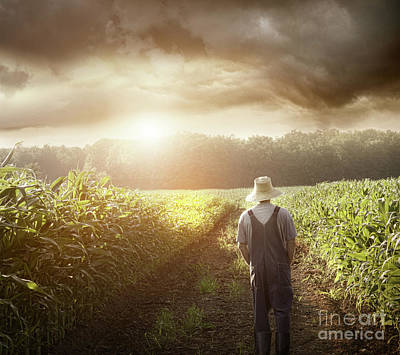 Farmer Walking In Corn Fields At Sunset Art Print