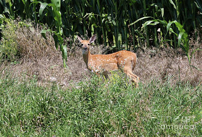 Photograph - Fawn In The Grass by Lori Tordsen
