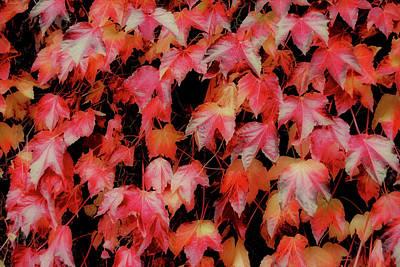Fiery Foliage Art Print by JAMART Photography
