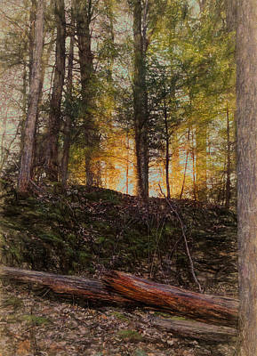 Mixed Media - First Light In The Forest by Dan Sproul