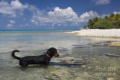 Fishing Dog Of Polynesia Art Print by Jean-Louis Klein & Marie-Luce Hubert
